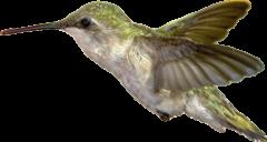 cropped-cropped-Kolibri2.png